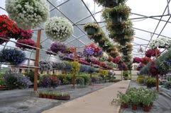 开花在苗圃里面的温室 库存图片