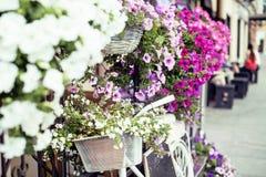 开花在葡萄酒自行车篮子在葡萄酒木房子墙壁,夏天街道咖啡馆上的 库存图片