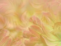 开花在被弄脏的桃红色黄色五颜六色的背景的瓣 所有所有构成要素花卉例证各自的对象称范围纹理导航 库存图片