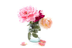 开花在银行中的三朵可爱的玫瑰 免版税库存照片