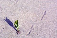 开花在鸟脚旁边的花 免版税库存图片