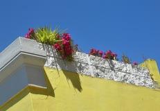 开花在黄色有白色窗口的被绘的房子开花在BoKaap,开普敦,南非 免版税库存照片