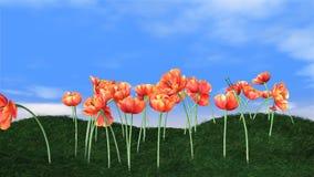 开花在绿色草甸和生气蓬勃的云彩的郁金香在背景,定期流逝,储蓄英尺长度 向量例证