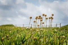 开花在绿色领域的野花 免版税库存照片