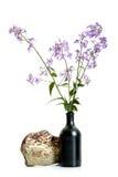 开花在黑c的Hesperes夜紫罗兰色丁香分支  免版税图库摄影