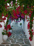 开花地中海缩小的街道 库存照片