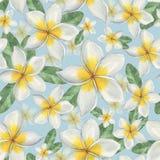 开花夏威夷人 无缝花卉的模式 免版税库存图片