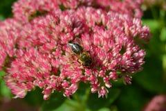 开花好的飞行红色白色植物绿色桔子蝴蝶 免版税库存照片