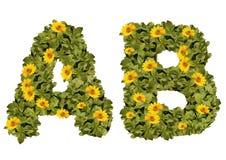 开花字母表A至B花染黄在绿色字法 免版税库存照片