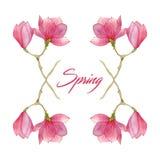 开花开花与木兰分支的春天例证在水彩 季节设计的元素 库存图片