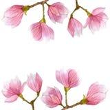 开花开花与木兰分支的春天例证在水彩 季节设计 库存图片