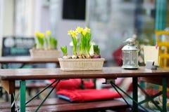 黄水仙开花开花在桌上的一个罐在一个室外咖啡馆 库存图片