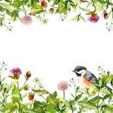开花开花,野草,春天草本,鸟 黑色看板卡空白色的花卉花的虹膜 水彩 免版税库存图片
