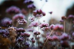 开花弄脏创造的生态设计想法背景 太阳领域植物看起来自然背景,黑暗的口气 免版税库存图片