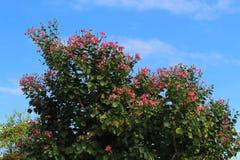 开花户外与天空的红色花 库存图片