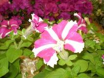 开花收集 库存照片
