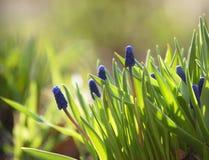 开花新鲜的庭院 免版税库存图片