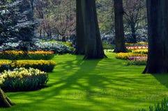 开花新鲜的庭院 库存图片