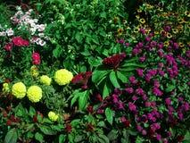 开花新鲜的庭院 免版税库存照片