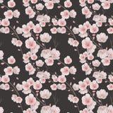 开花无缝樱桃的模式 图库摄影