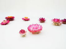 开花明亮的透视 背景构成旋花植物空白花的郁金香 秋天 免版税库存照片