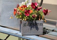 开花有五颜六色的蝴蝶花的箱子在木长凳 库存照片