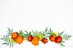 开花构成图象 库存图片