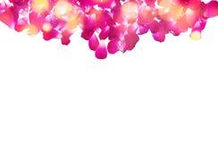 开花构成 由玫瑰花瓣做的框架 免版税库存照片
