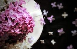 开花构成 图库摄影