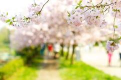 开花树和花在公园 与人的美好的春天自然视图 树和阳光 晴天场面  自然bac 免版税库存图片