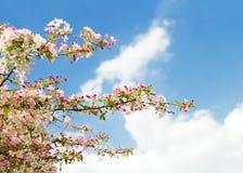 开花树 库存图片