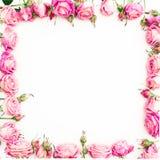 开花桃红色玫瑰边界框架在白色背景的 平的位置,顶视图 库存照片
