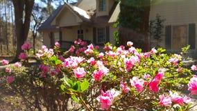 开花桃红色的花在阳光下 免版税库存照片