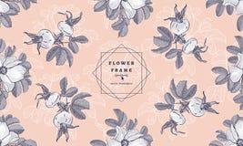 开花框架狂放的玫瑰和野玫瑰果,花卉时尚样式 手拉的boho植物的图画 传染媒介品牌设计 库存图片