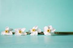 开花框架由水仙做成在中立绿色背景 Fl 库存图片
