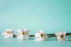 开花框架由水仙做成在中立绿色背景 Fl 免版税库存照片