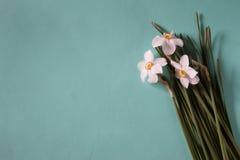 开花框架由水仙做成在中立绿色背景 Fl 图库摄影