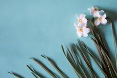 开花框架由水仙做成在中立绿色背景 Fl 免版税图库摄影