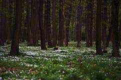 开花森林 免版税库存照片