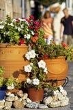 开花植物场面街道 免版税图库摄影
