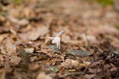 开花植物本质上 免版税图库摄影