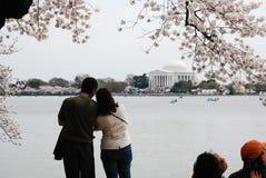 开花樱桃夫妇享受节日华盛顿 免版税库存图片
