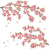 开花樱桃日本佐仓结构树 向量例证