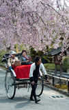 开花樱桃时间游人 库存图片