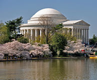开花樱桃构成的杰斐逊纪念品 免版税库存图片