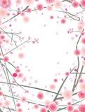 开花樱桃模式李子 免版税库存照片
