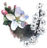 开花樱桃的水彩例证 库存图片
