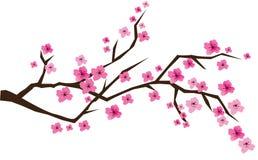 开花樱桃 向量例证