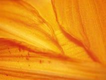 开花橙色瓣纹理 免版税库存照片