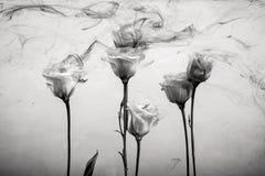 开花水背景白色里面在油漆丙烯酸酯玫瑰色烟条纹黑色下 免版税图库摄影
